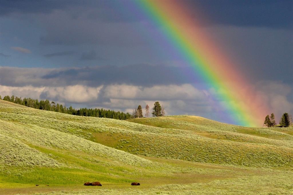 Arcobaleno a Yellowstone - Todd Cravens / Unsplash